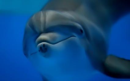 dolphin425
