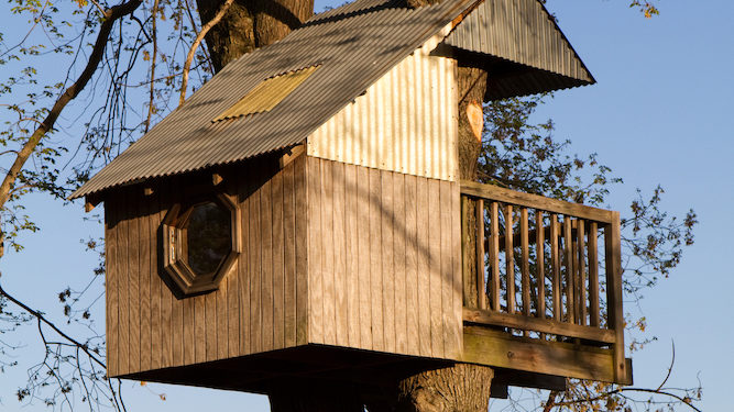 Johnson and Rees-Mogg hold secret meeting in treehouse where