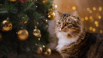 Cat Christmas.I Will End You Cat Tells Christmas Tree