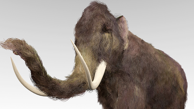 Woolly Mammoth or Giant Elk? Which neolithic creature should be the next Tory leader?
