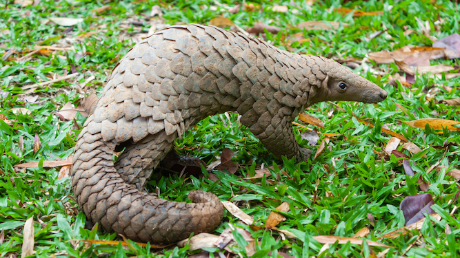 Disney shelves heartwarming movie about sick pangolin being cared for by his bat friend